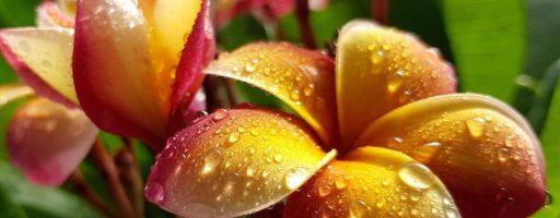 Plumeria Garden Show dal 29 al 30 giugno a Palermo