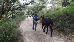 Antica Trasversale Sicula, Al via la magia del secondo Cammino dell'Antica Trasversale Sicula