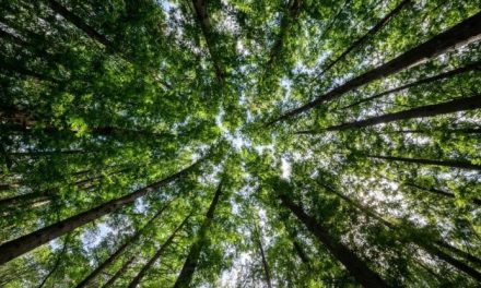 A Venezia nasce un bosco per il cinema
