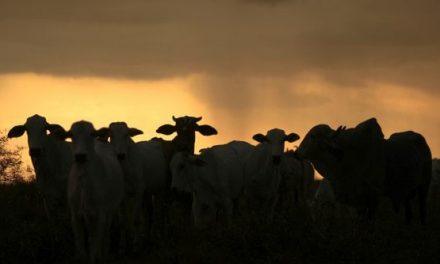 L'Olanda fa la guerra ai suoi allevatori per colpa della pipì delle mucche