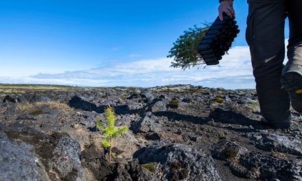 Vuoi piantare un albero? Ecco tutto quello che devi sapere