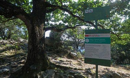 """Da """"miniera di carbone"""" a sito Unesco. Tra Mediterraneo e Pirenei, la faggeta della Massane, sentinella vivente dei cambiamenti climatici"""