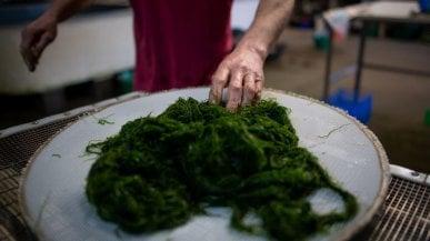 """Una dieta di mare ci sfamerà: il """"cibo blu"""" alleato della salute e dell'ambiente"""