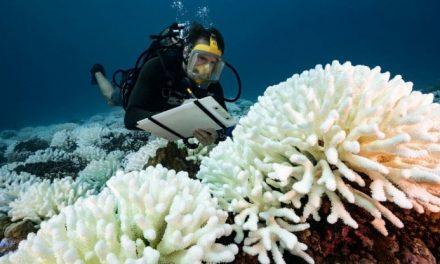 In 70 anni coralli dimezzati, crollo della biodiversità