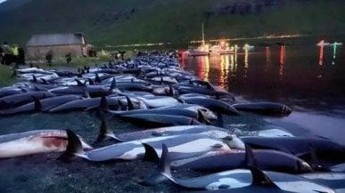 """Mattanza dei delfini, Alberto Luca Recchi: """"La caccia tradizionale delle Faroe non è più sostenibile"""""""