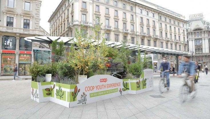 Diecimila alberi e arbusti in 10 città: arrivano le oasi urbane