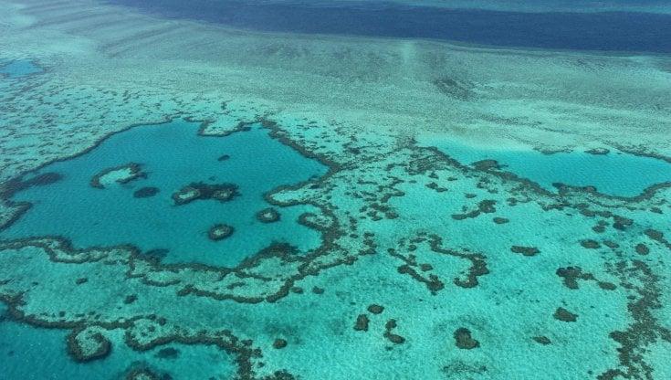 """Australia: barriera corallina """"a rischio"""" come Venezia: Canberra contro l'Unesco (e la Cina)"""