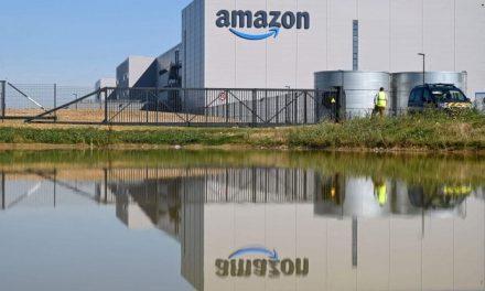 Amazon investe 2 milioni di euro per piantare alberi in Italia