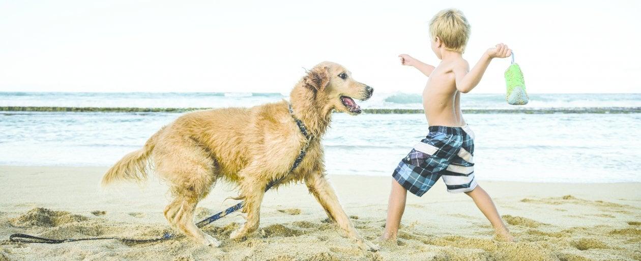 Un'estate in spiaggia con il cane. I diritti e i doveri del padrone (e del quattro zampe)