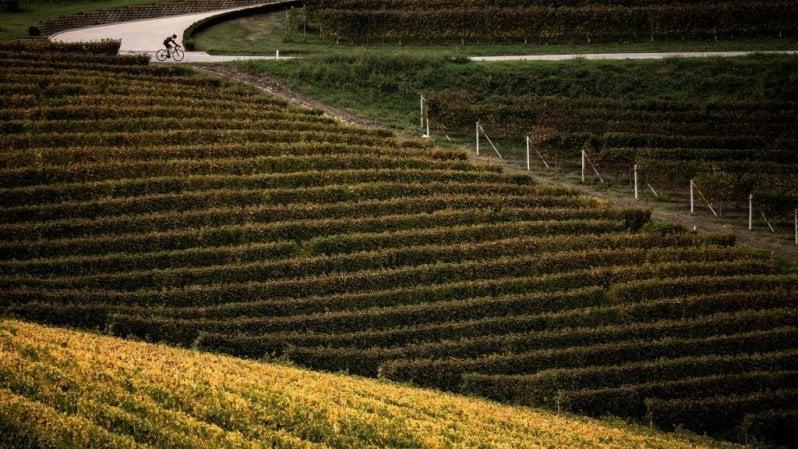 La Bassa Langa in bici: sulle strade del vino e del tartufo