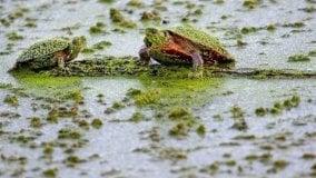 Fiumi e laghi si stanno trasformando in zuppe tossiche. Come nella grande estinzione del Permiano