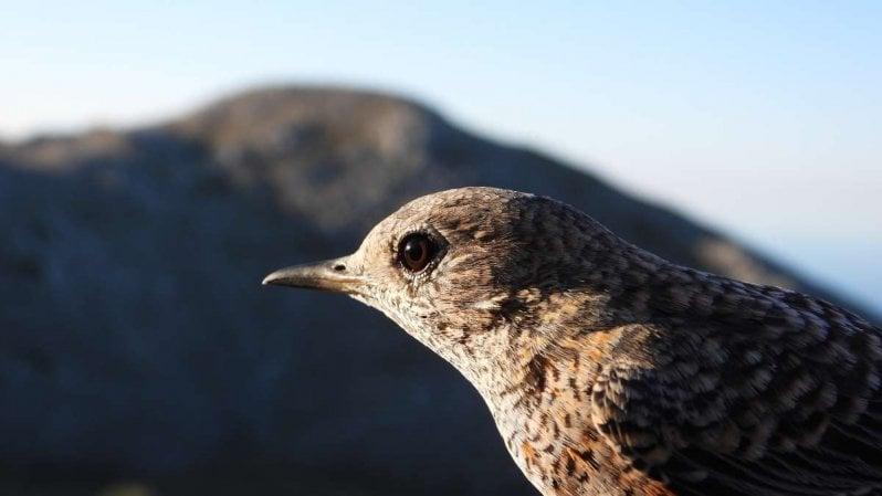 """Ornitologi sull'Appennino campano: """"Gli uccelli stanno perdendo la bussola"""""""