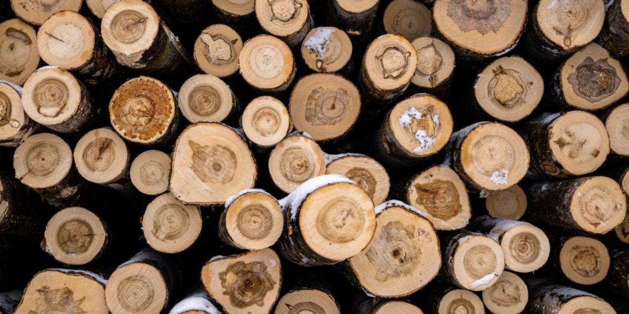 Per fare una batteria ci vuole il legno. La cellulosa sfida gli ioni di litio