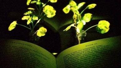 La luce elettrica? Arriverà dalle piante