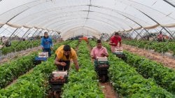 Se i batteri sostituiscono i fertilizzanti l'ambiente ringrazia