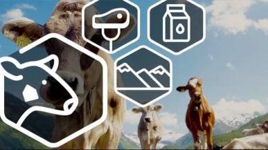 Bio, vegan, ogm: sui cibi un'icona (universale) per sapere cosa mangiamo