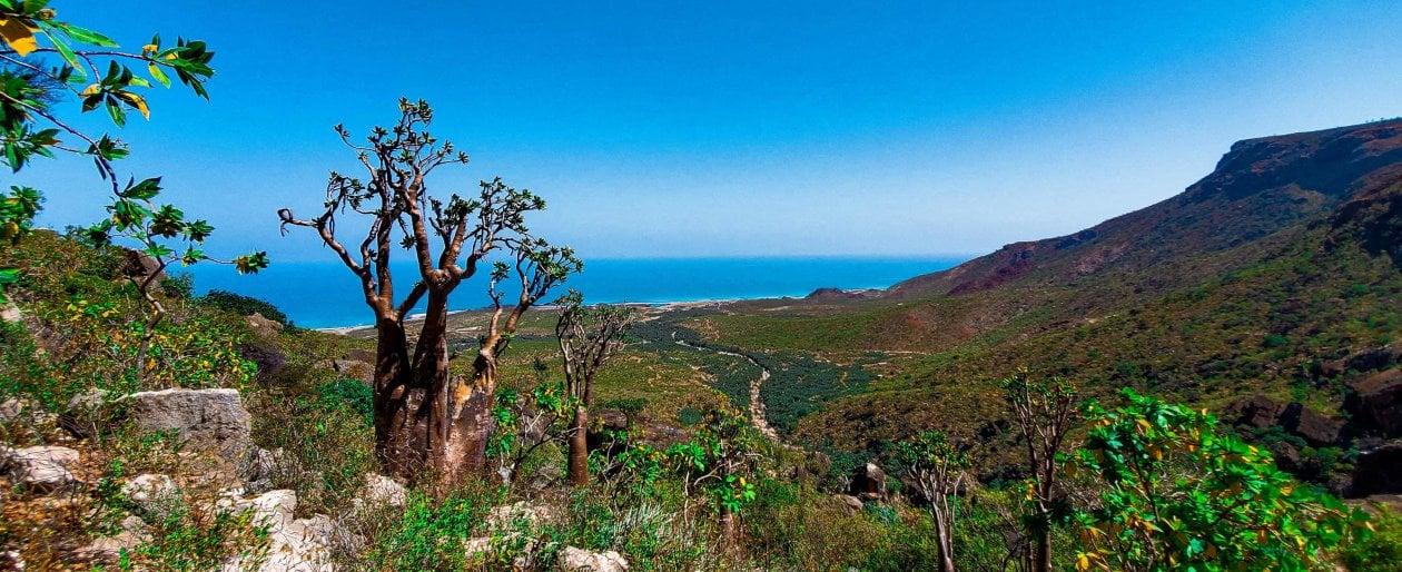 """Socotra, l'eden yemenita che punta al turismo di domani. """"Venite a scoprire le Galapagos dell'Oceano Indiano"""""""
