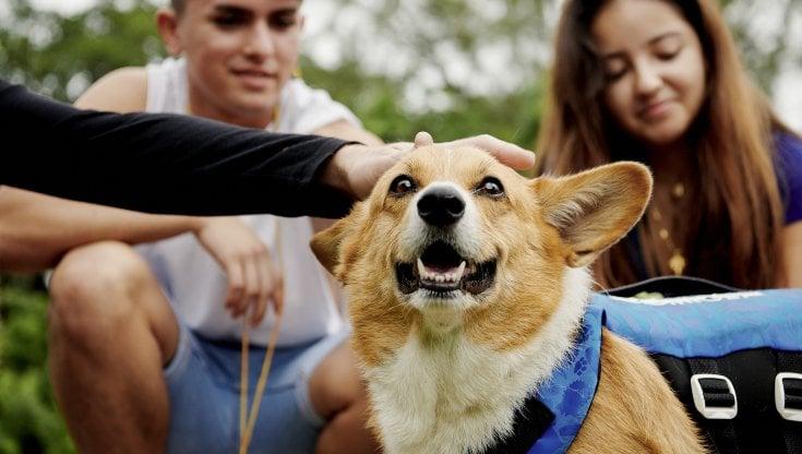Airbnb, Italia prima destinazione in Europa per vocazione pet friendly degli host