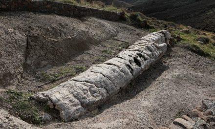 """Grecia. Dalla foresta pietrificata di Lesbo affiora albero di 20 milioni di anni fa intatto. """"Mai visto uno così, ci svelerà l'isola che fu"""""""