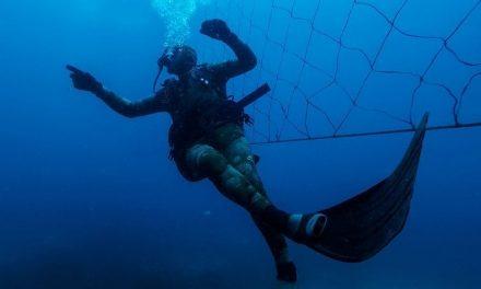 """Sud Africa. Le reti antisqualo fanno tornare i turisti. """"Ma sono una trappola mortale, anche per i delfini"""""""