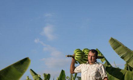La spesa sostenibile al supermercato? Comincia dal marchio equosolidale